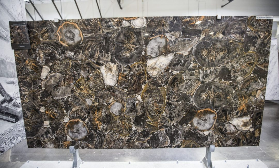 Black Petrified Wood- Precioustone