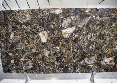 Black Petrified Wood- Precioustone