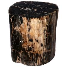 Stone Spotlight of the Month- Black Petrified Wood